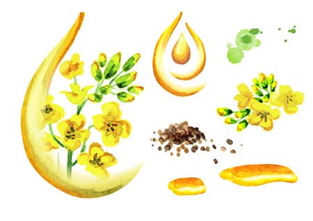유채 기름 세트입니다. 흰 배경에 고립 된 수채화 그림