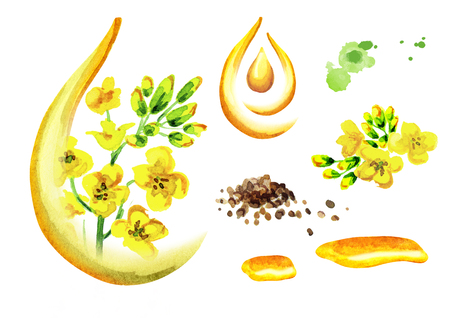 Rapeseed oil set. Watercolor illustration, isolated on white background Stock Photo