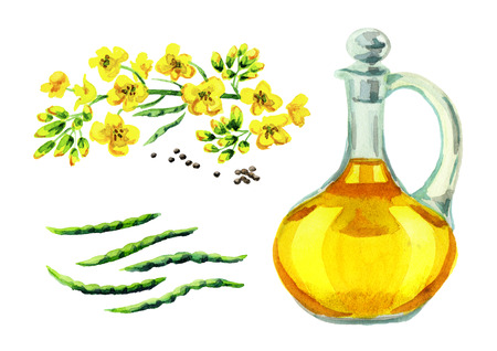 Rapeseed oil set. Watercolor hand drawn illustration, isolated on white background
