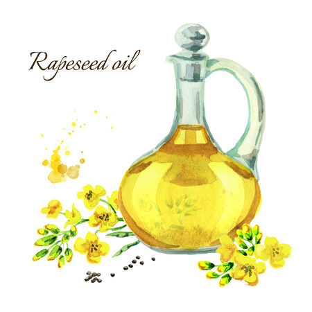Rapeseed oil. Watercolor hand drawn illustration, isolated on white background