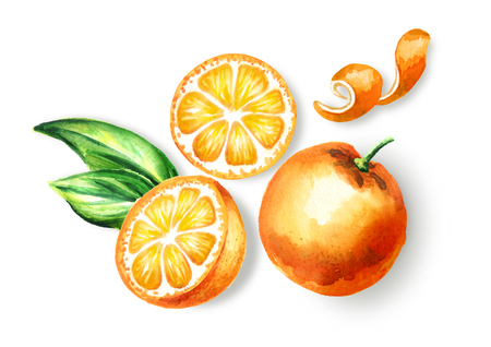 Fresh Orange  fruit top view composition. Watercolor hand drawn illustration, isolated on white background