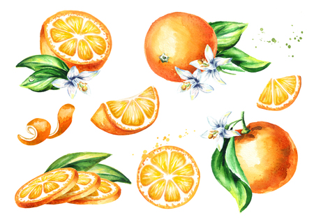 Fresh Orange fruit compositions collection. Watercolor hand drawn illustration, isolated on white background Imagens