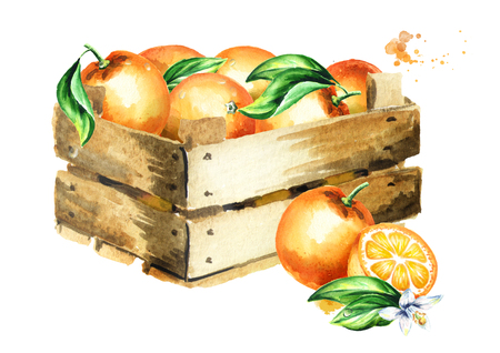 Box with oranges. Watercolor hand-drawn illustration, isolated on white background Фото со стока