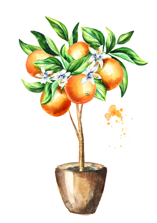 Orange tree with fruit and leaves. Watercolor hand drawn vertical illustration, isolated on white background