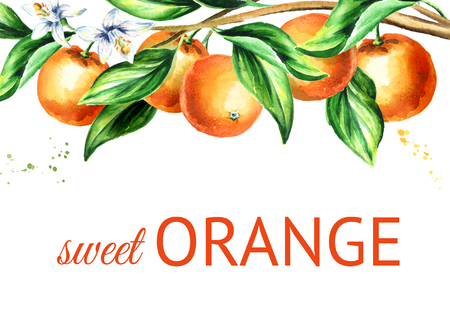 Orange  branch with fruit and leaves. Watercolor hand drawn horizontal background Stock Photo