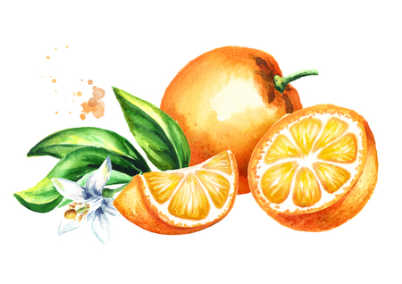 Fresh Orange  fruits, leaves and flower composition. Watercolor hand drawn  illustration, isolated on white background