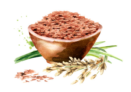 Red Rice in a bowl. Watercolor hand drawn illustration, isolated on white background