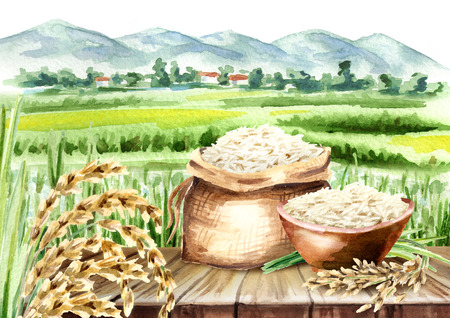 Rice composition in landscape with field. Watercolor hand drawn illustration Фото со стока