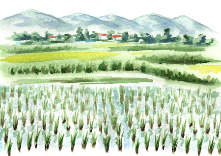 Rice field   background. Watercolor hand drawn illustration Banco de Imagens