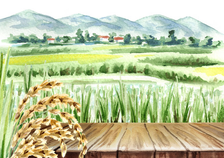Rice field and empty table  background. Watercolor hand drawn illustration Standard-Bild