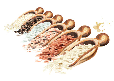 Scoops with different rice varieties. Watercolor hand drawn illustration, isolated on white background