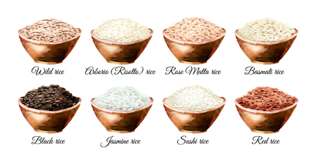 Rice variety. Watercolor hand drawn illustrations set, isolated on white background 스톡 콘텐츠