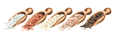 Wooden scoops with different rice types. Watercolor hand drawn illustration, isolated on white background