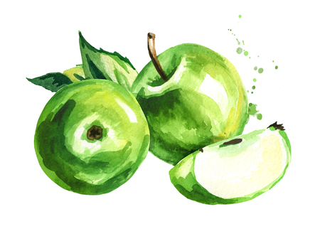 Green Apples composition. Hand drawn watercolor illustration, isolated on white background