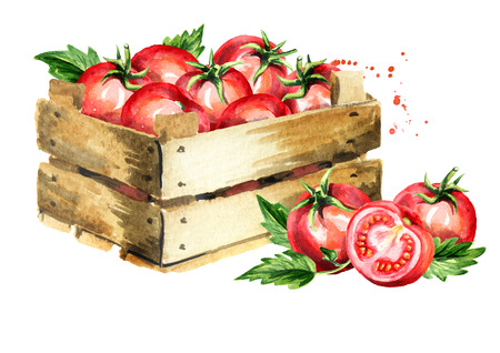 Box with ripe red tomatoes. Watercolor hand drawn illustration, isolated on white background