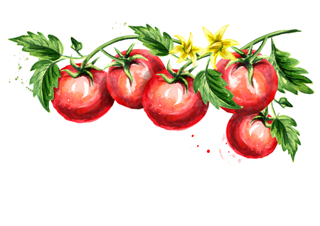 Ripe tomatoes on a branch with leaves and flower. Watercolor hand drawn horizontal illustration, isolated on white background Stockfoto