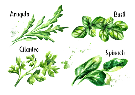 Fresh salad herbs set. Watercolor hand drawn illustration isolated on white background 스톡 콘텐츠