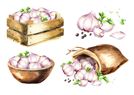 Garlic set. Watercolor hand drawn illustration isolated on white background