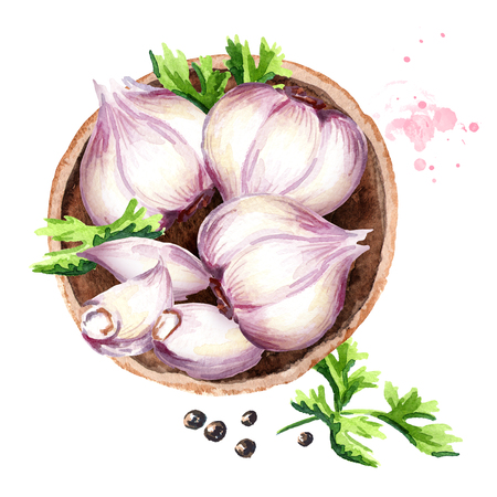 Plate with garlic, top view. Watercolor hand drawn illustration, isolated on white background Stock Photo
