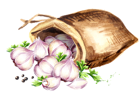 Sack with garlic. Watercolor hand drawn illustration, isolated on white background