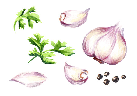 Garlic and parsley set. Watercolor hand drawn illustration, isolated on white background Stock Photo