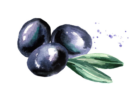 Black Olive fruit and leaves. Watercolor hand drawn illustration, isolated on white background