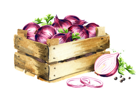 Box with onion. Watercolor hand drawn illustration, isolated on white background