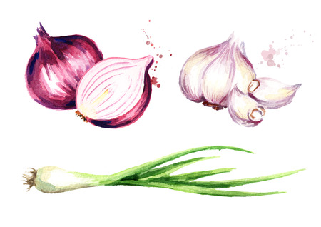 Onion, green chive and garlic set. Watercolor hand drawn illustration, isolated on white background Imagens