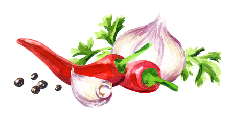 Young garlic, cilantro, chilli peppers and peppercorns. Watercolor hand drawn illustration isolated on white background