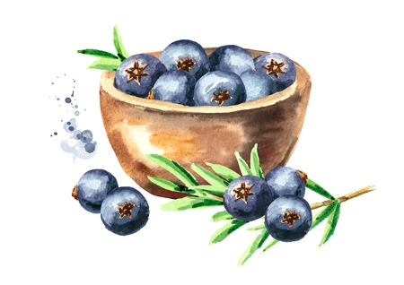 Bowl with Juniper berries. Watercolor hand drawn illustration isolated on white background