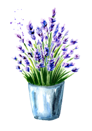 Lavender bouquet in a bucket. Watercolor hand drawn illustration, isolated on white background