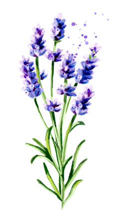 Lavender bouquet. Watercolor hand drawn vertical illustration, isolated on white background Stock Illustration - 98853179