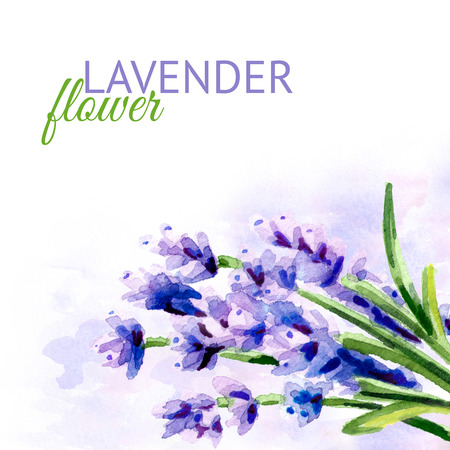 Lavender flower background. Watercolor hand drawn illustration, isolated on white background Stock Photo
