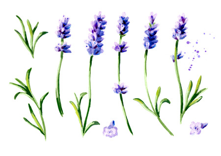 Lavender flower set. Watercolor hand drawn vertical illustration, isolated on white background Stock Photo