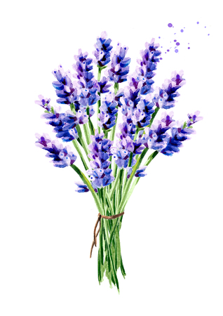 Lavender summer bouquet. Watercolor hand drawn vertical illustration, isolated on white background