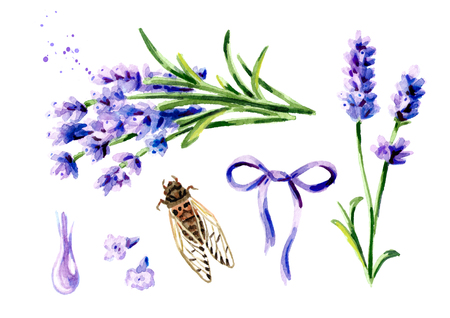 Lavender summer set. Watercolor hand drawn vertical illustration, isolated on white background