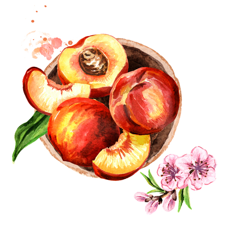 Fresh Peach fruit in the platter top view composition. Watercolor hand drawn illustration