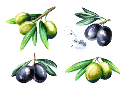 Black and green olives on the branch set, isolated on white background. Watercolor hand drawing illustration