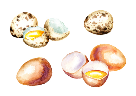 Eggs set. Watercolor  isolated on white background hand drawn illustration