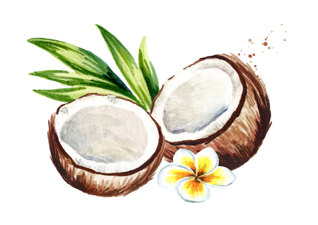 Two halves of coconut with flower and green leaves. Watercolor hand drawn illustration, isolated on white background