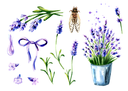 Provence Lavender summer set. Watercolor hand drawn vertical illustration, isolated on white background Stock Photo