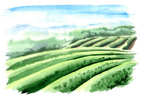 Scenery of tea plantation. Hand drawn watercolor illustration