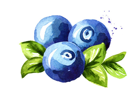 Blueberry composition. Fresh berries with leaves. Hand drawn watercolor illustration  isolated on white background 写真素材