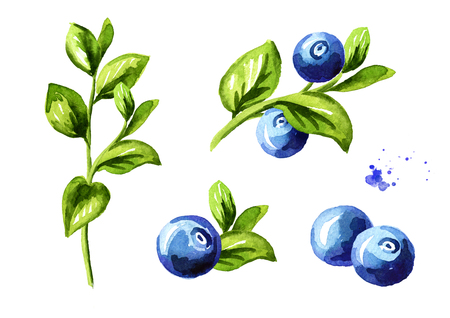 Blueberry compositions set. Fresh berries with leaves and branches. Hand drawn watercolor illustration  isolated on white background