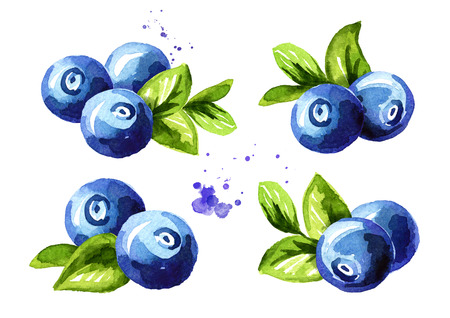 Blueberry compositions set. Fresh berries with leaves. Hand drawn watercolor illustration  isolated on white background 写真素材