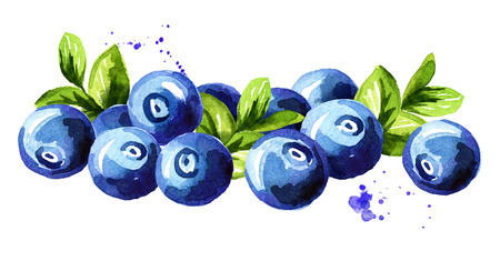 Blueberry. Heap of fresh ripe berries with leaves. Hand drawn watercolor illustration  isolated on white background
