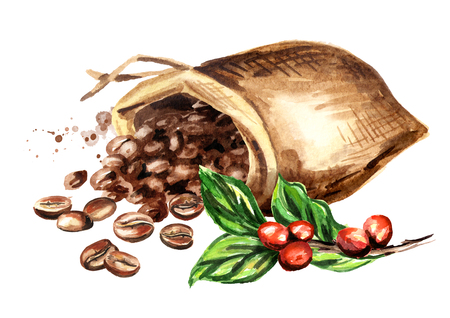 Sack of coffee beans and green coffee branch. Watercolor hand drawn illustration, isolated on white background