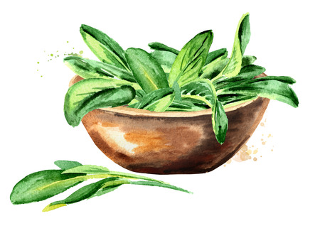 Medicinal and cosmetics herb Salvia officinalis. Bowl with sage green leaves. Hand drawn watercolor illustration isolated on white background Banco de Imagens
