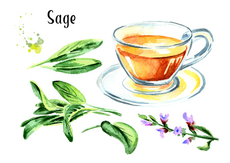 Medicinal herb Salvia officinalis. Cup of medical tea. Infusion made from sage leaves set. Hand drawn watercolor illustration,  isolated on white background