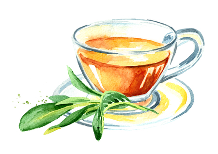 Medicinal herb Salvia officinalis. Cup of medical tea. Infusion made from sage leaves. Hand drawn watercolor illustration isolated on white background